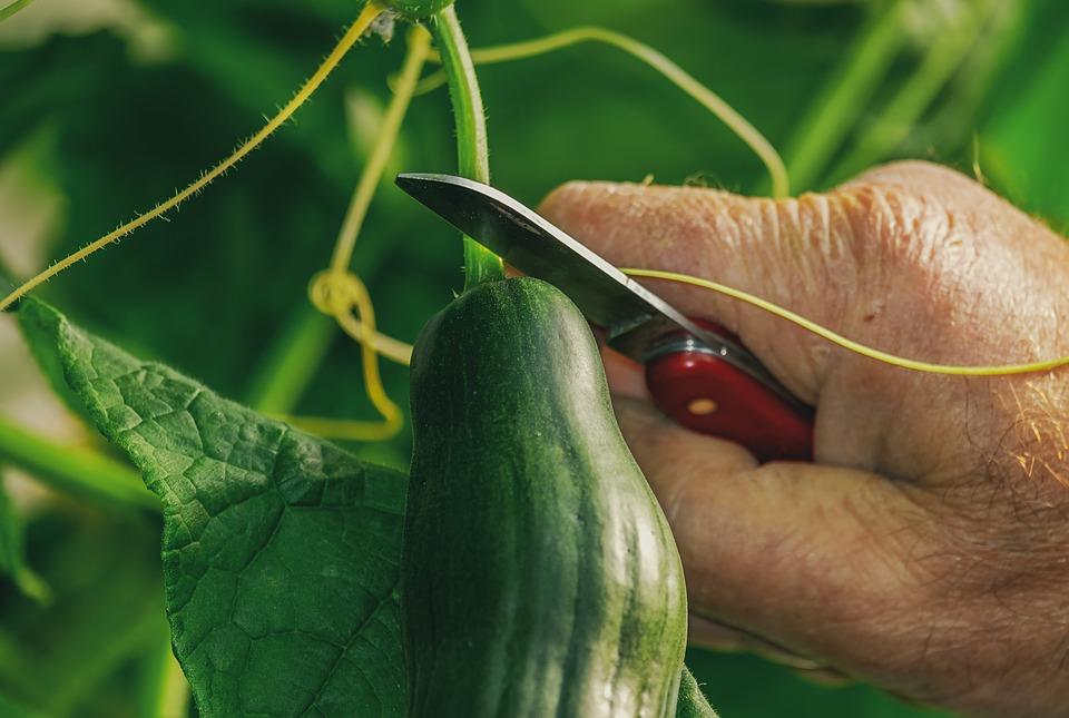 Ранние овощи богаты нитратами